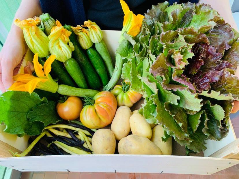 Visita l'orto bio e ricevi una cassetta di verdure!